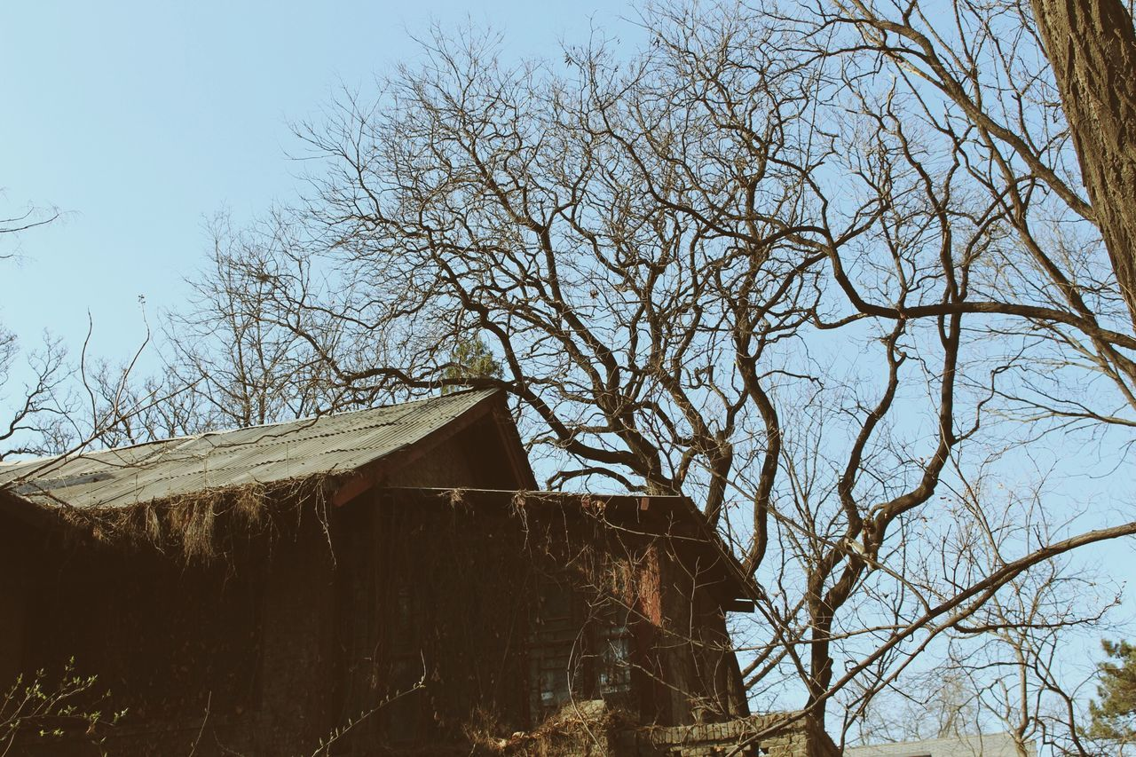 tree, built structure, architecture, bare tree, building exterior, house, no people, day, branch, outdoors, sky, nature, low angle view, clear sky, beauty in nature