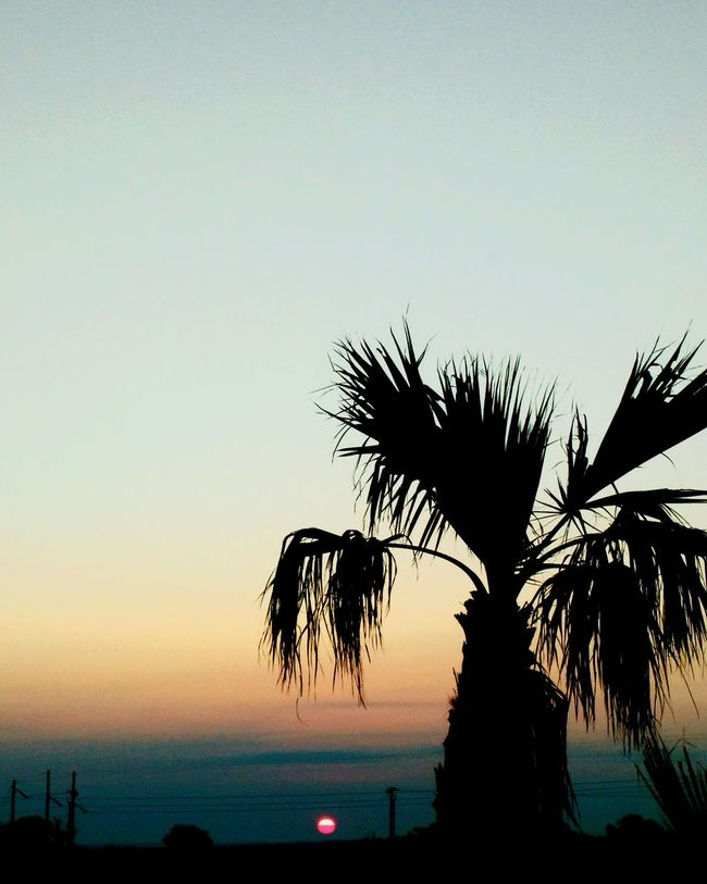Palm Tree Tranquil Scene Tree Silhouette Beauty In Nature Nature Dark Sky Outdoors Sun Sunrise Texaslife Randomshot Not Sure If I Like Thiss..