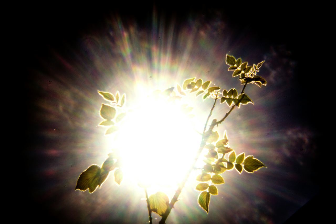 Low Angle View Of Plant Against Bright Sun