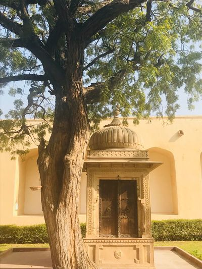 🙏🏼 Rajasthan India Temple Tree Architecture Built Structure Day Outdoors Building Exterior Sunlight No People Nature Sky Branch