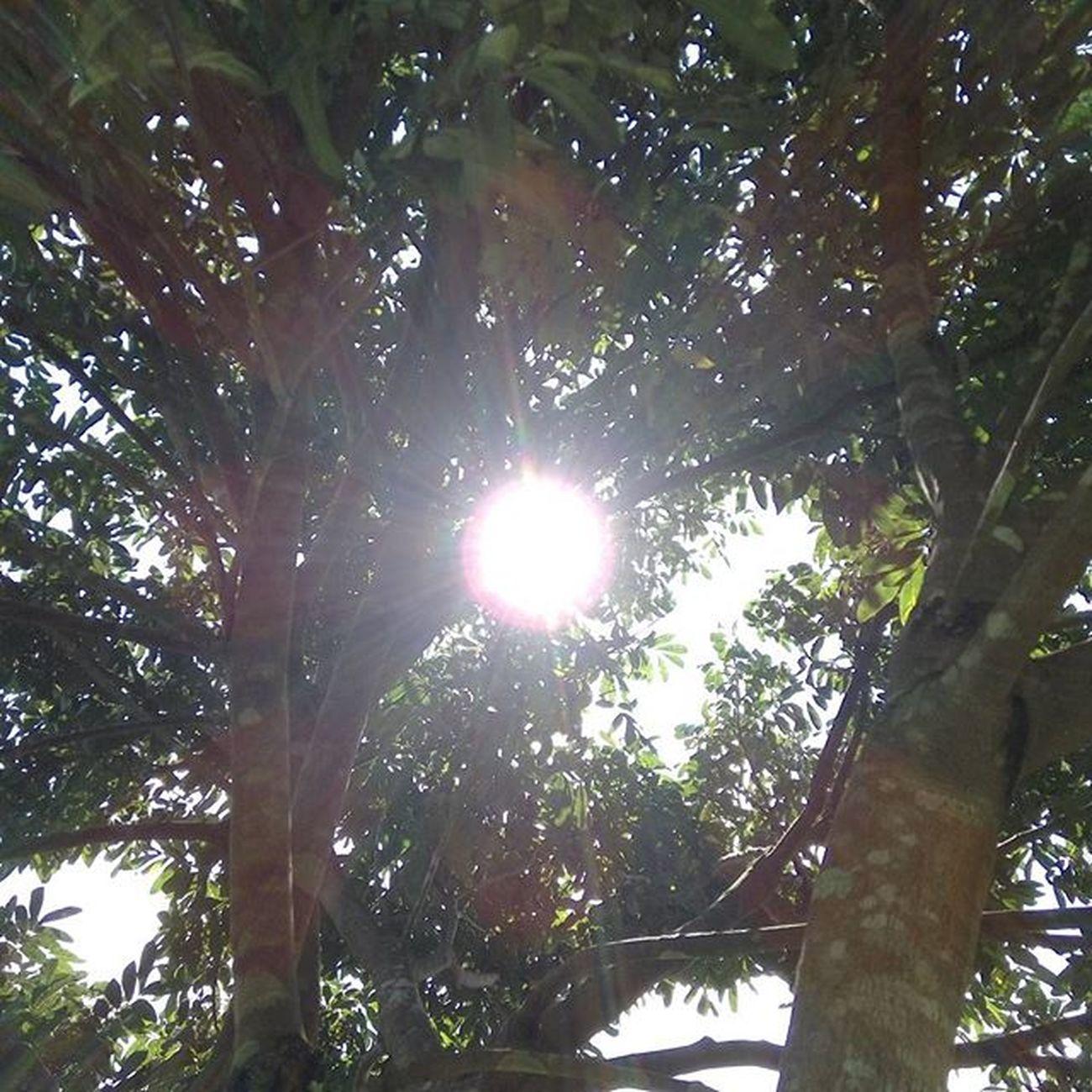 Menembus rimbunnya daun... Bright Sun Light Daylight Hot Tree Life Instagram Noedit Original Naturalcolor