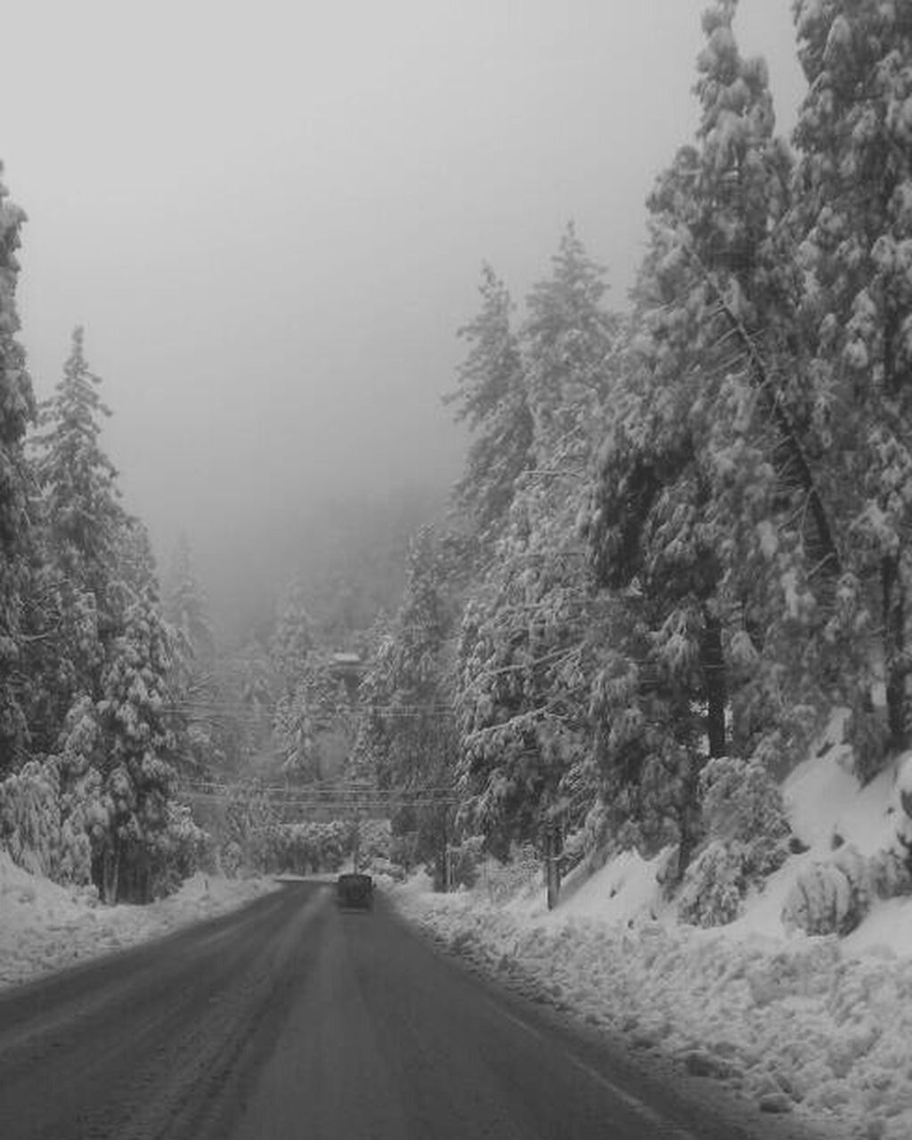 road, the way forward, tree, nature, winter, weather, snow, cold temperature, transportation, outdoors, fog, no people, curve, day, scenics, landscape, forest, snowing, beauty in nature, sky