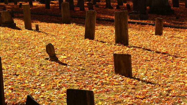 Autumn Autumn Colors Autumn Leaves Colorful Day Fall Fall Beauty Fall Colors Fall Leaves Graveyard Graveyard Beauty Halloween Leaves No People Outdoors Shadow Sunlight Tomb Tombstone Trees