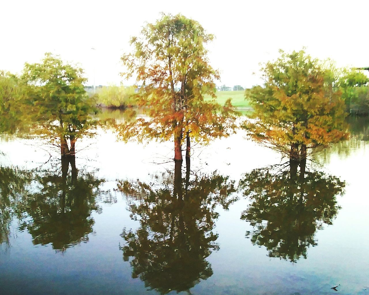 tree, reflection, nature, lake, tranquility, tranquil scene, water, beauty in nature, no people, outdoors, scenics, day, growth, forest, sky, clear sky