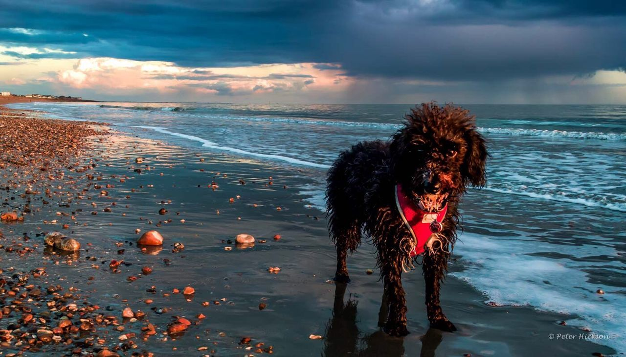 Avoiding the evening showers on the dog walk Sunset Evening Beach Hayling Island  Clouds Dusk Showers Cavapoo Dog Dogwalk Sea And Sky Waves