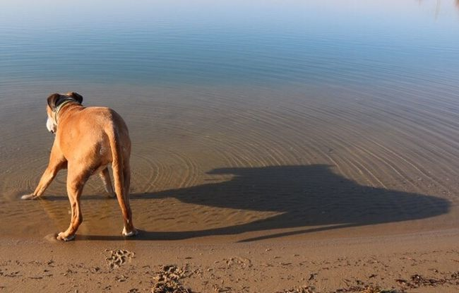 Big Dog Shadow Nature Water_collection Nature_collection Dog EyeEm Nature Lover