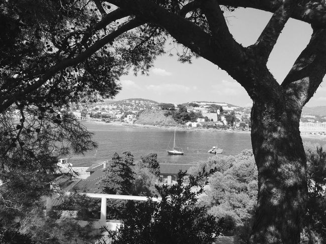 Can you feel the France Tree Branch Transportation High Angle View Water Mountain Sky Vacations Sea Cloud - Sky Travel Destinations Tourism Harbor Outdoors Nature Day Scenics Tranquil Scene Distant Monochrome Photography