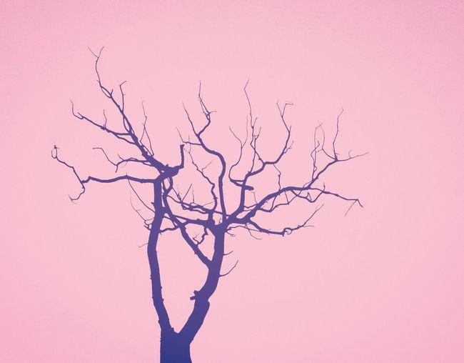 Dead wood Dead Tree Pink Minimalism Monochrome