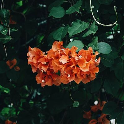 | 🍃 🌺 🍃 ☝ | What does your soul look like? Vscocam VSCO Vscovietnam Vscoflowers Flower Hometown Green Orange Tb Fresh Morning Country Countryside Streetphotography Ontheroad Plant Nature Photo Photooftheday Instagood Instadaily Instamood
