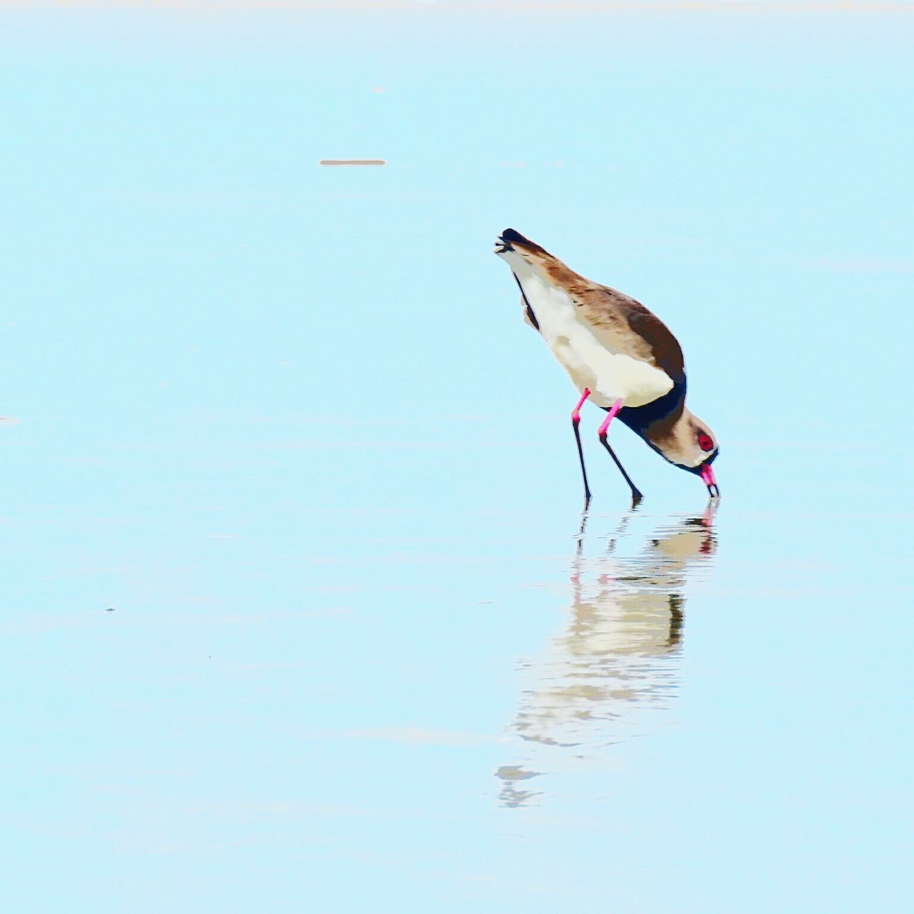 one animal, bird, animals in the wild, animal themes, animal wildlife, water, nature, waterfront, day, no people, outdoors, lake, beauty in nature