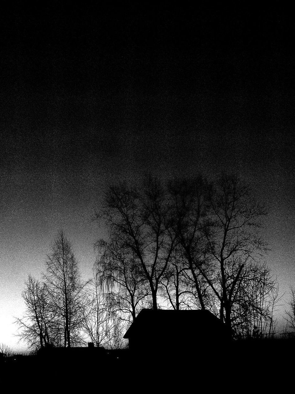 Home Trees Darkness And Light Blackandwhite Black And White Black & White Nature Ligth And Shadow Trees And Sky
