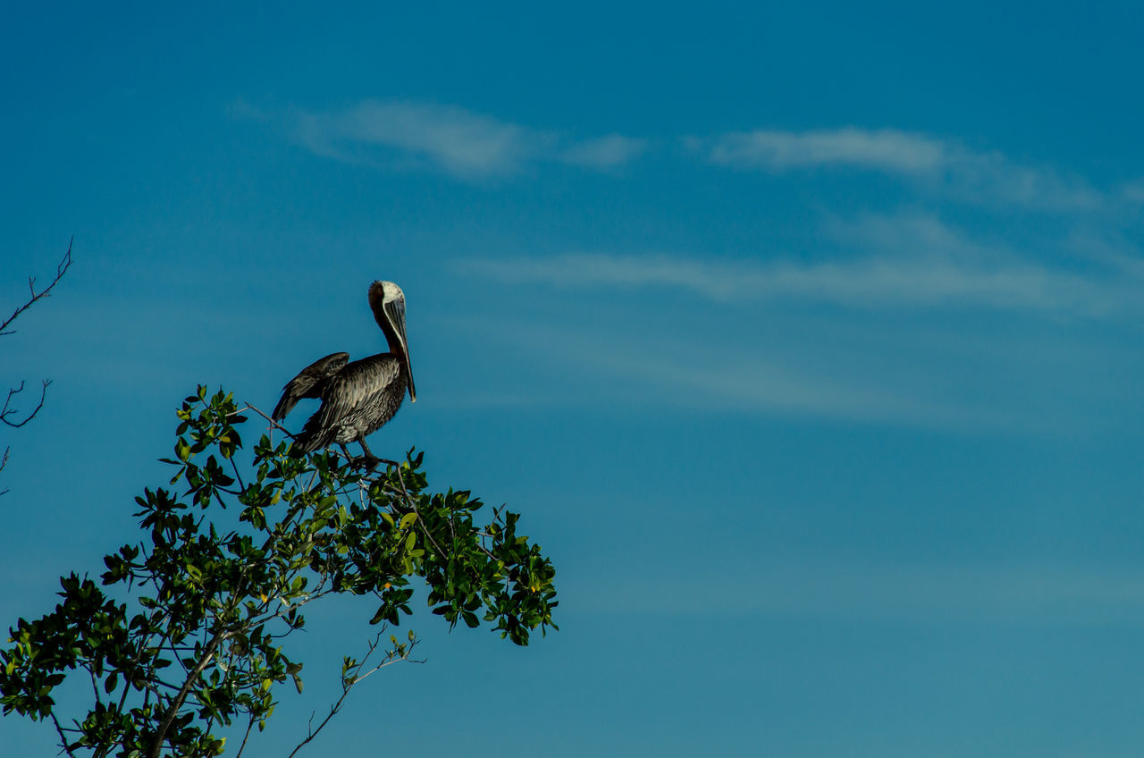 animals in the wild, one animal, animal themes, nature, bird, sky, animal wildlife, day, low angle view, no people, tree, outdoors, cloud - sky, beauty in nature, perching