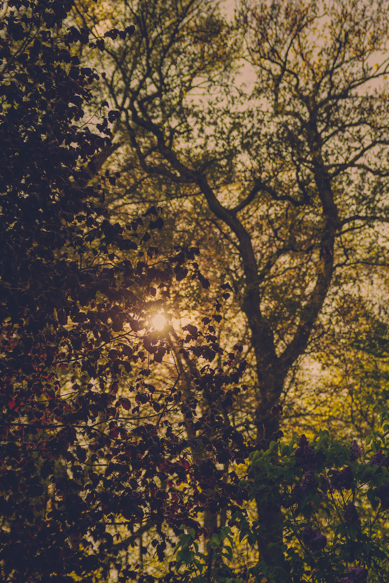 Gegenlicht Autumn Backlit Beauty In Nature Branch Contre-jour Shot Day Growth Illuminated Low Angle View Nature No People Outdoors Scenics Sun Sunlight Tranquility Tree