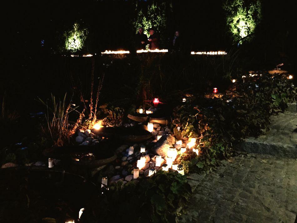 Illuminated Night Outdoors Trees Graveyard AllSaintsDay Candles