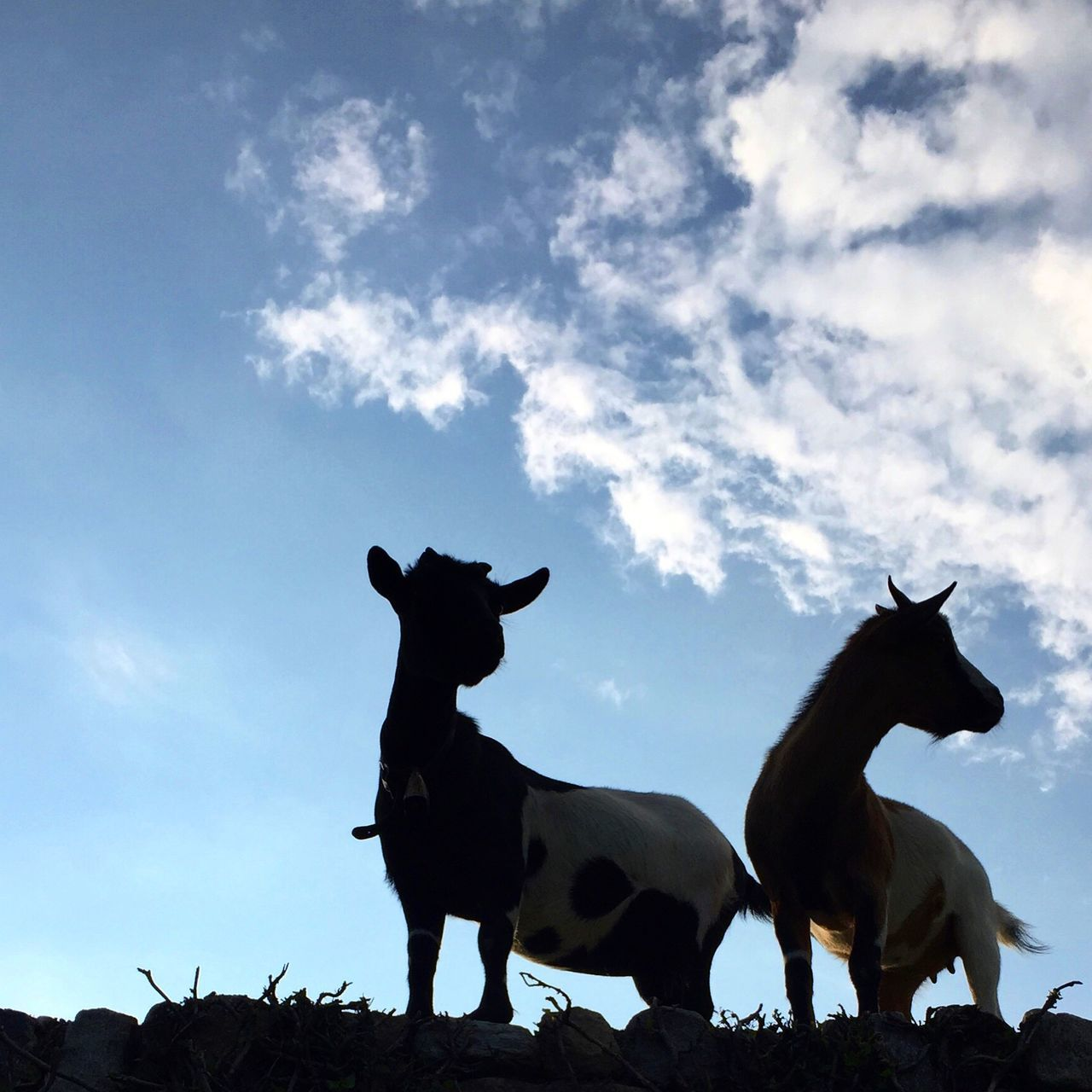 Beautiful stock photos of goat, Animal Themes, Animals In The Wild, Cloud - Sky, Day