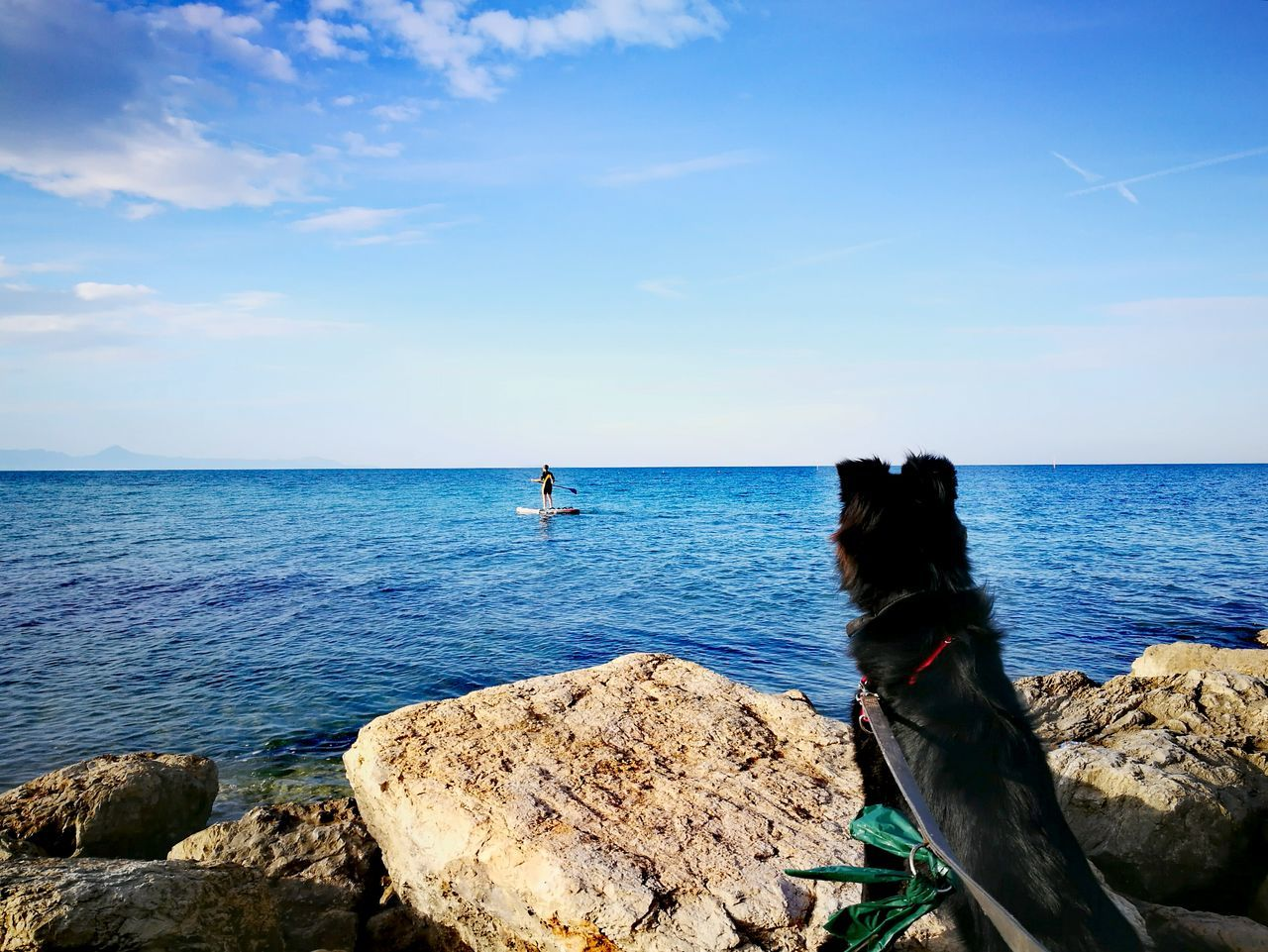 sea, sky, horizon over water, animal themes, water, one animal, nature, rock - object, scenics, beauty in nature, mammal, domestic animals, outdoors, day, tranquil scene, no people, cloud - sky, tranquility, pets, blue