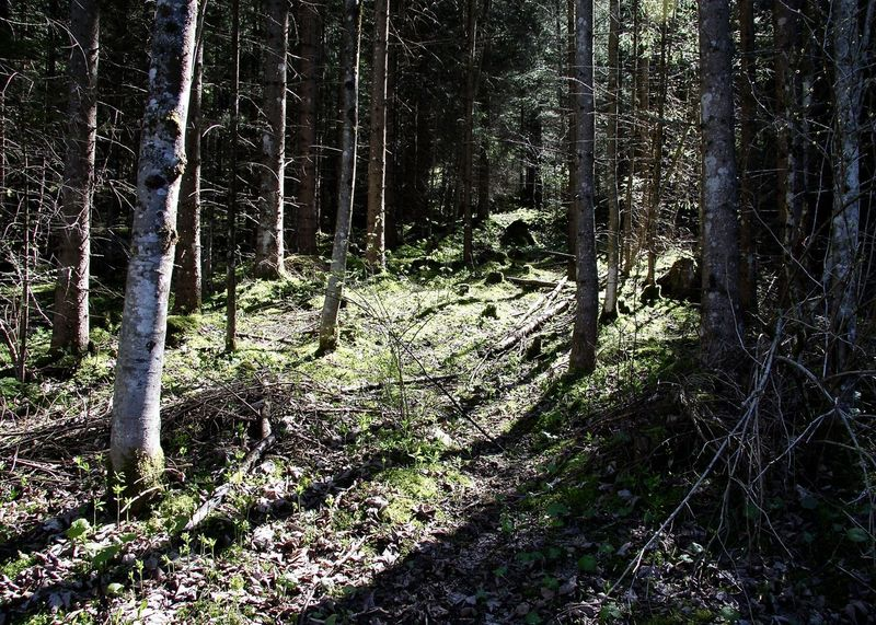 ...missing the man Beauty In Nature Colors Forest Greenery Growth Light Light And Shadow Nature No People Outdoors Scenics Shillouette Spring Sunbeam Tannheimer Tal Tirol  Tranquil Scene Tranquility Tree Tree Trunk Vilsalpsee WoodLand Let's Go. Together.