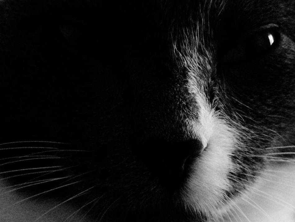 кот котэ Коты Котик Котейка котики котоселфи мой кот Фибоначчи