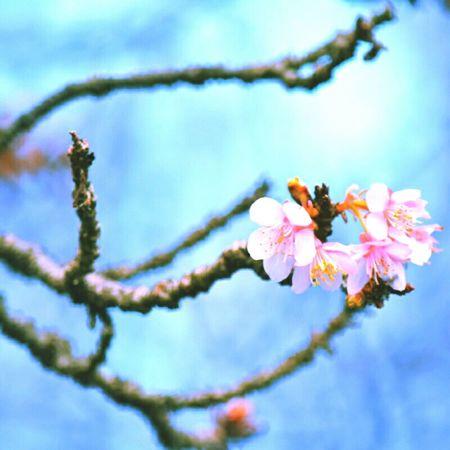 morning.. Flowers Nature Goodmorning Monday Nikon Keicomoment