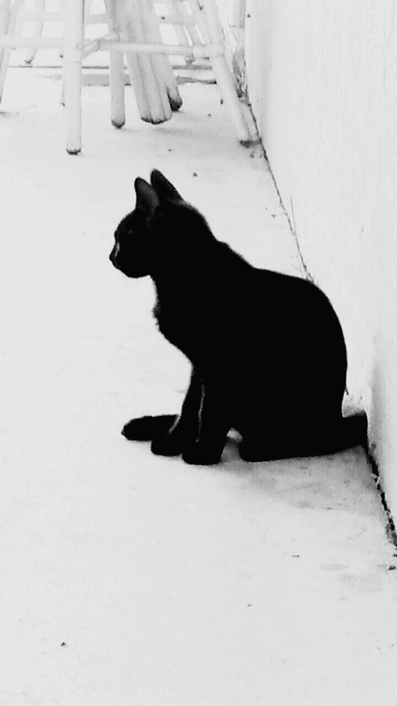 My cat shadow Cat Lovers