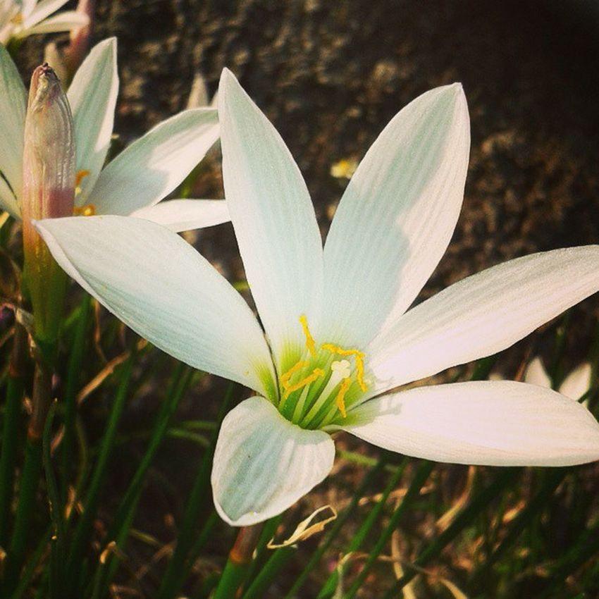 Flower ABeautiful Flower DBC Click_by_me xoxo 😝😍😘