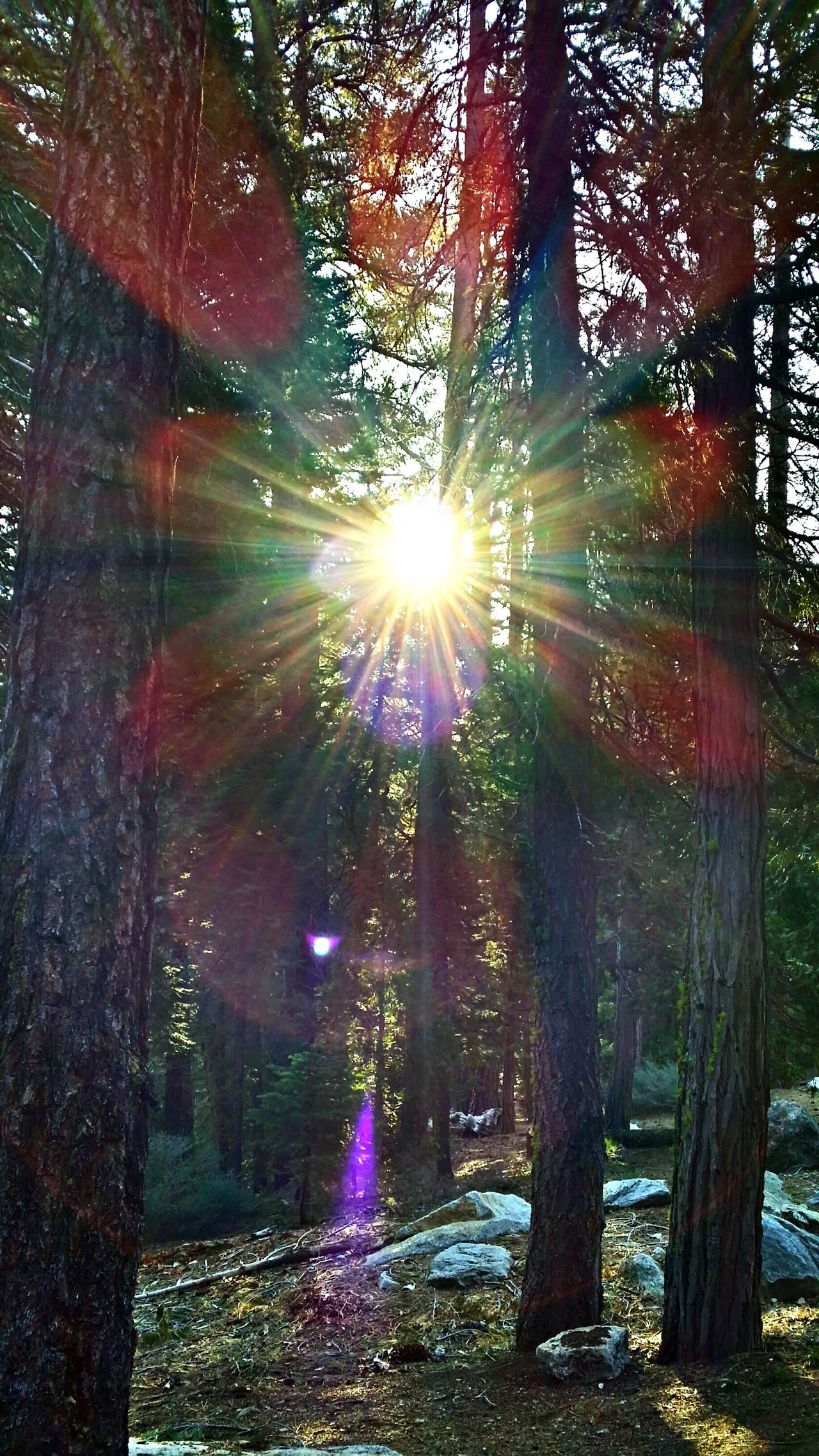 Waking up in the forest. Good Morning Sun. Hugging A Tree Eyem Nature Lovers  New Day Rising Nature_collection