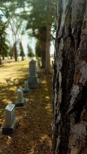 Row of headstones at Lusk Wyoming cemetery Outdoors Close-up Day Headstones In A Row No People Shadow Sunlight Trees In A Row