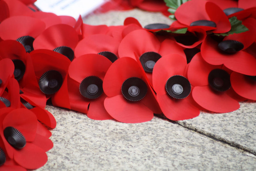 Abstract Remembrance Day Scene Abstract Anzac Day Armistice Armistice Day 11th Hour Of The 11th Day Of The 11th Month, 1918 ArmisticeDay Close-up Conceptual Creativity Day Indoors  No People Poppy Poppy Flowers Red Remembrance Remembrance Day Remembranceday Remembrancepoppy