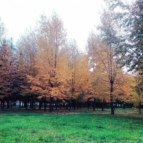 осень листва красиво прогулка грусть Autumn небо Walk Way Nature Sky Life Wonderfull краски  Россия Russia Fall Road Colours