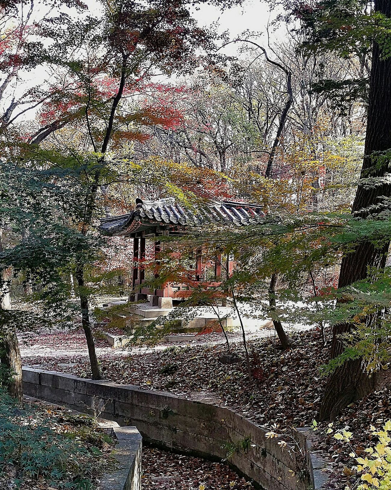 Pavilion Autumn2014 Autumn Colours Secret Garden Changdeokgung Palace Seasons Seoul Korea Beautifulkorea Travel Photography