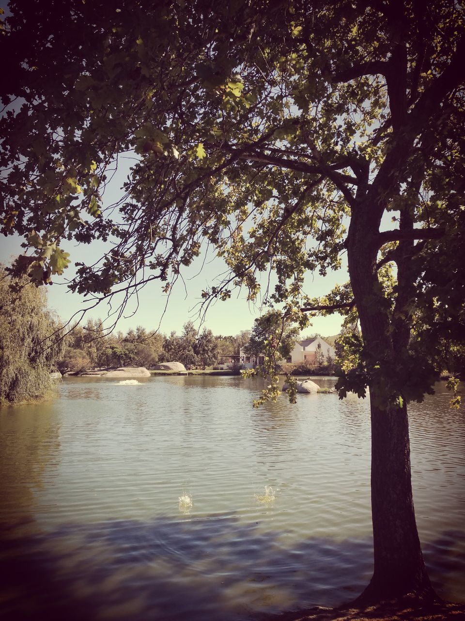 tree, nature, lake, beauty in nature, branch, tranquility, water, no people, tranquil scene, outdoors, growth, scenics, sky, day