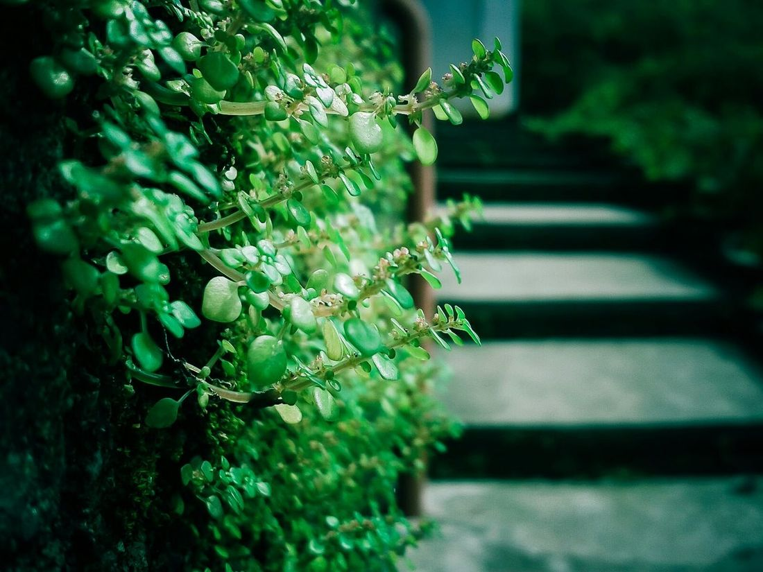 Mas arriba se pone mejor Green Power Plantitas Escaleras Puerto Vallarta Vallarta Urban Nature