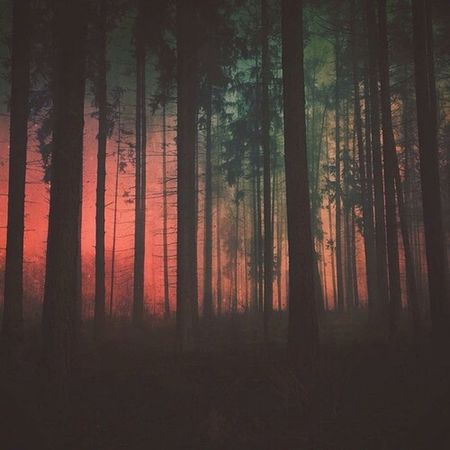 Night Fall Landscape Pale Darkness Trees Photography Nature Woods Frost Foggy
