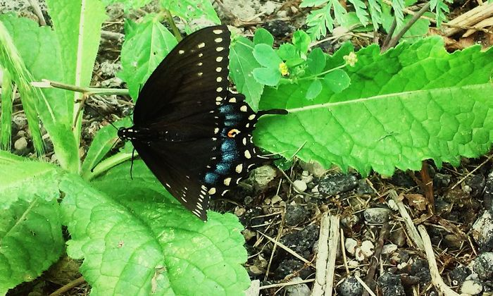 Butterfly Enjoying Life Summer Black