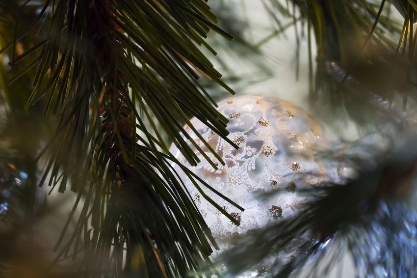 Christmas Ornament glass ball nestled in Christmas tree Glitter Ornament Background Christmas Ornament Christmas Tree Close Up Close-up Glass Glass Ornament Indoors  Nature Nestled In Tree No People Shoot Through