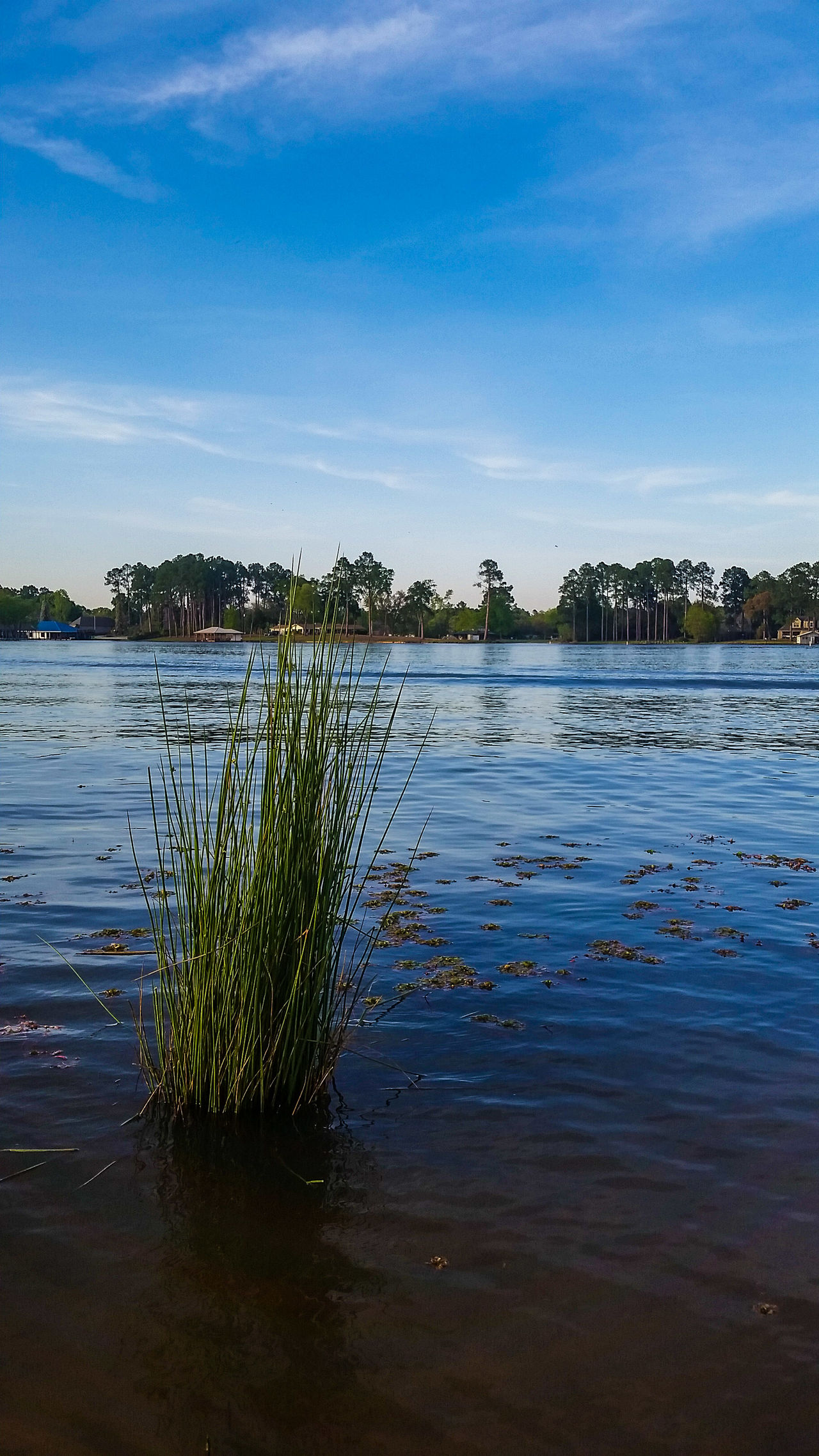 Beautiful stock photos of texas,  Beauty In Nature,  Day,  Lake,  Lake Tyler