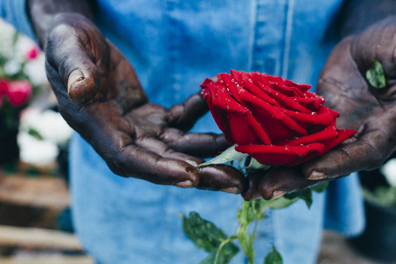 A hawker holds a rose carefully Care close-up flower focus on foreground fragility Freshness holding human body part human hand one person real people Red rose - flower roses street seller The Street Photographer - 2017 EyeEm Awards