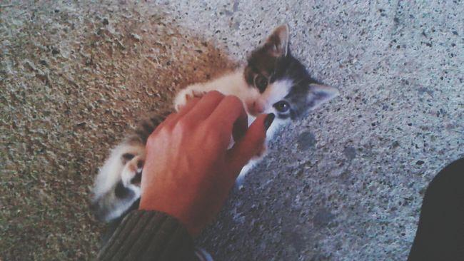 Cat♡ Love Chillin With My Cat