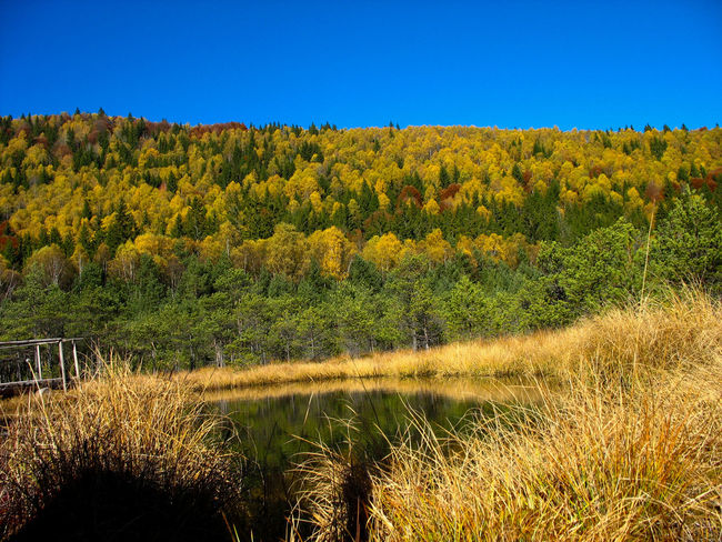 Autumn Collection Autumn Colors Biodiversity Forestry Nature Photography Panoramic Photography Protected Areas Protectedspecies