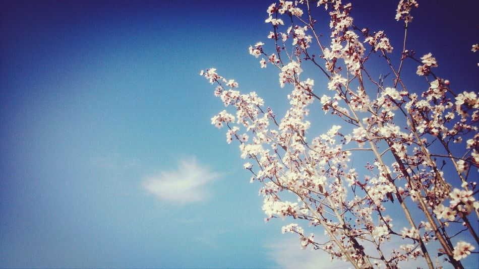 Hello World Enjoying Life Spring Flowers Izmir