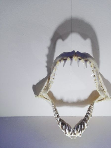 Shark Theeth Jaw Shadow Mexico City Eyeemphoto