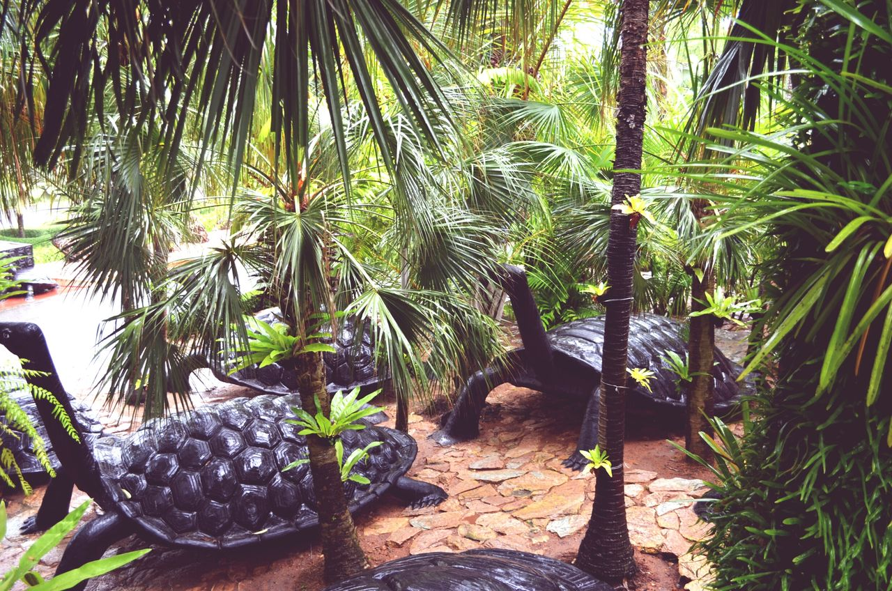 Thailand Travel Growth Plant Nature No People Green Color Beauty In Nature Botanical Garden Travel Destinations Pataya Summer Turtles Monument Palm Trees