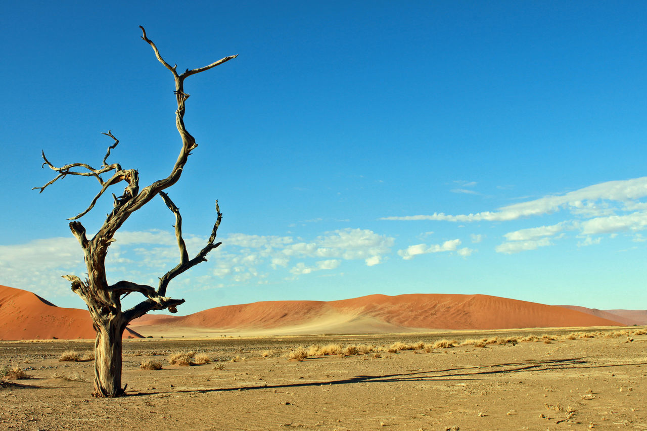 Beautiful stock photos of pflanzen, Arid Climate, Bare Tree, Beauty In Nature, Cloud - Sky