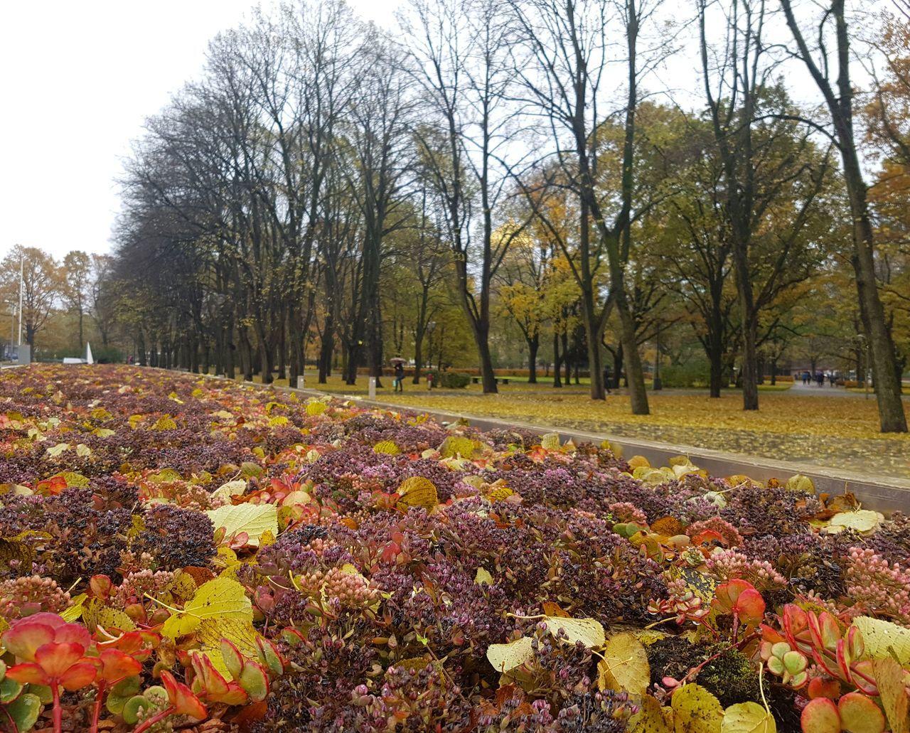A rainy day in Riga Autumn Flowers Latvia Park Rain Rainy Day Rainy Days Riga