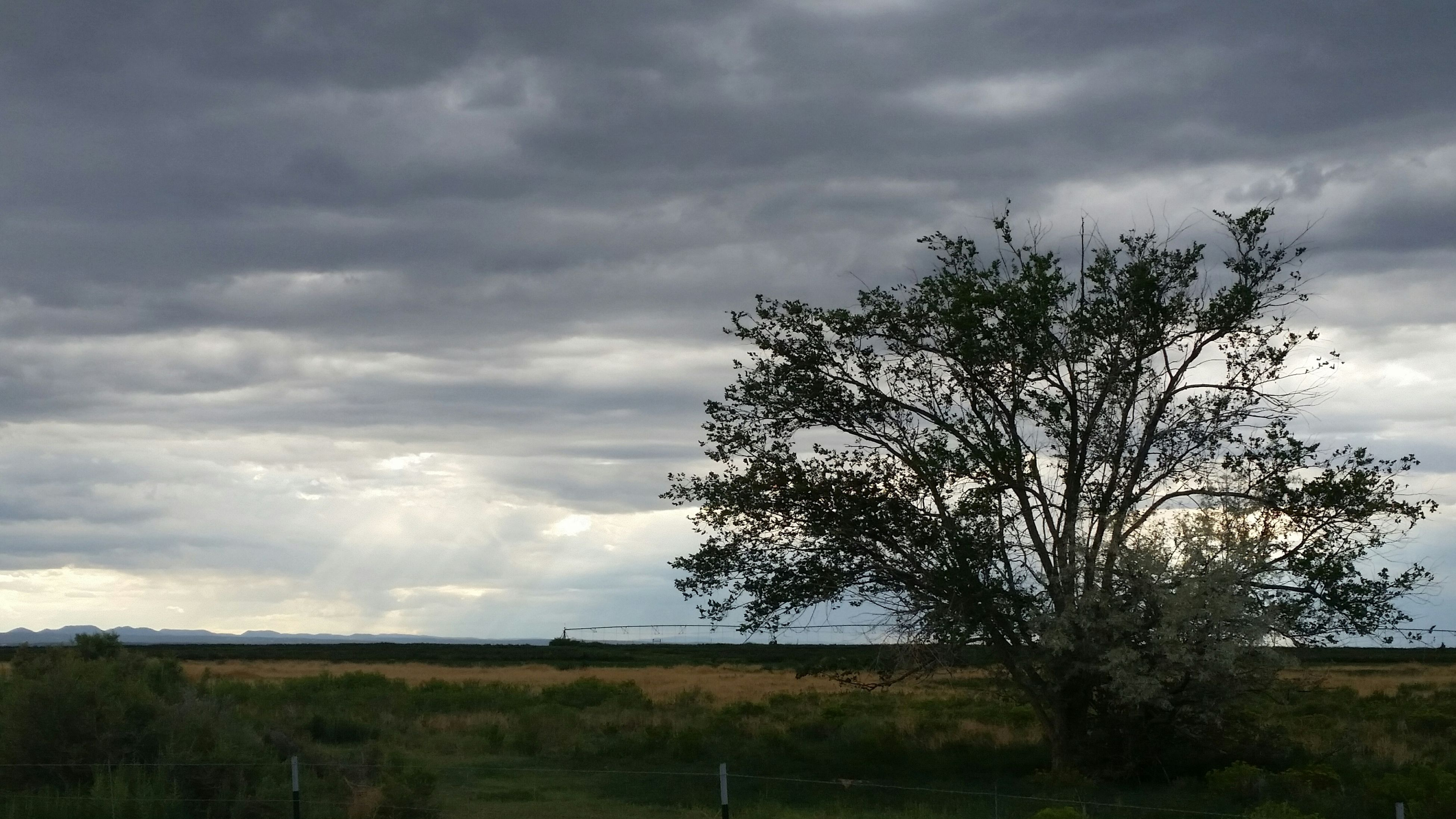 sky, tree, cloud - sky, field, tranquility, grass, cloudy, landscape, tranquil scene, cloud, growth, nature, scenics, beauty in nature, bare tree, grassy, branch, non-urban scene, plant, day