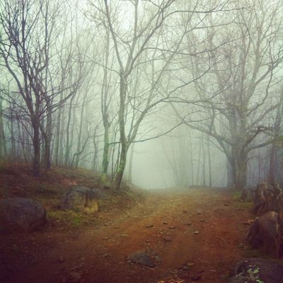 The Appalachian Trail by Kritterz