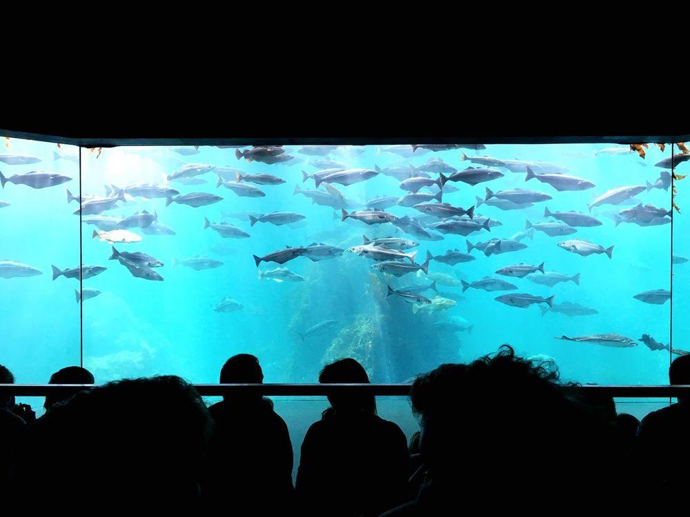 Aquarium In Ålesund Fish Aquarium Large Group Of Animals Silhouette Animals In Captivity School Of Fish Sea Life Watching Water Swimming Indoors  Women Whale Shark Real People Travel Destinations Group Of Animals Leisure Activity Underwater Shark Lifestyles