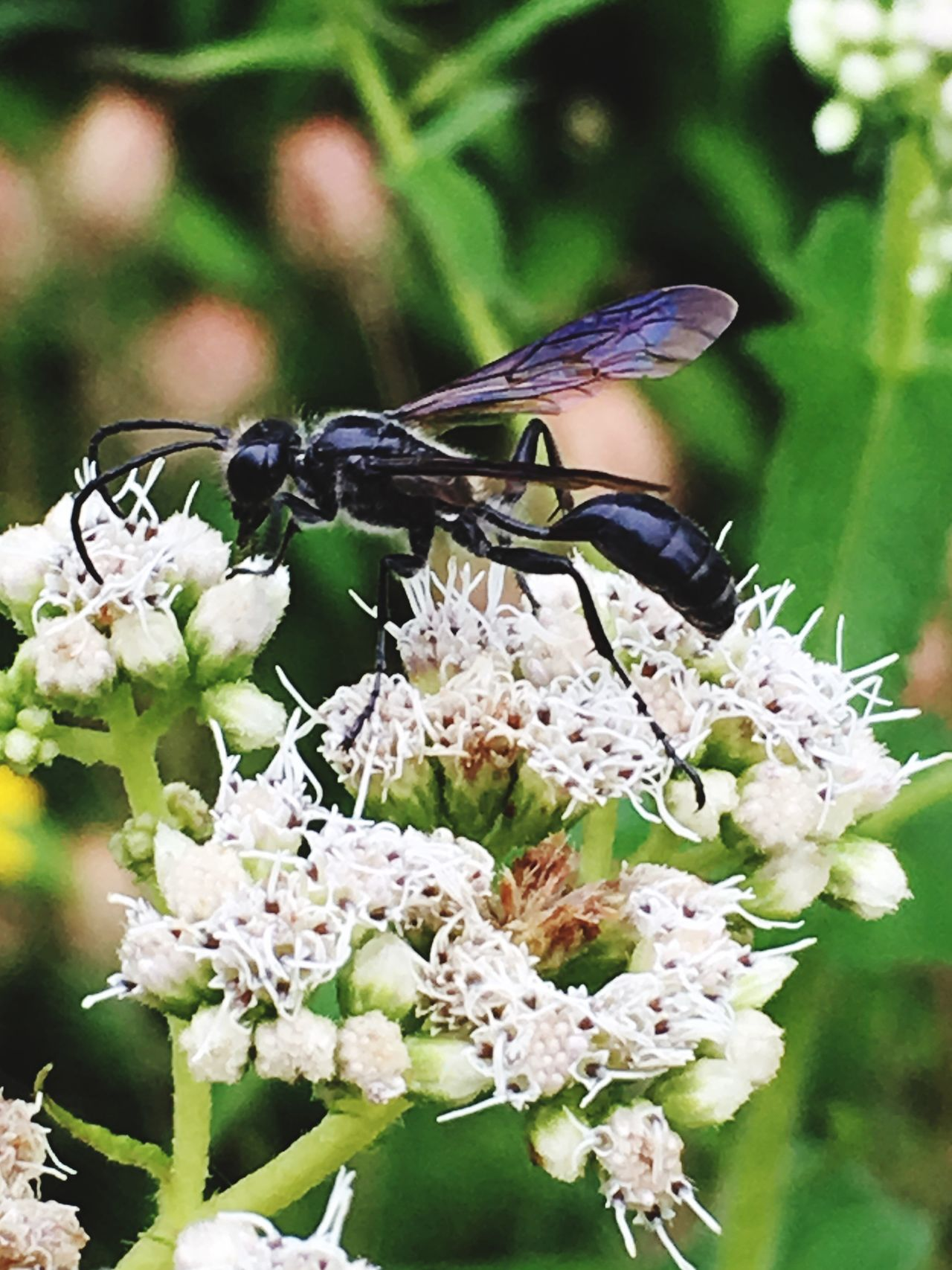 Wasp ! Gardening Wasp At Work Loving My Flower Flower Pollenation 'flowers And Plants Green Thumb Summers In Ontario Garden Photography My Garden @my Home Photography Mother Nature My Passion ❤