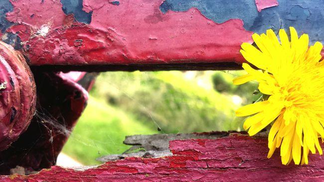 Flowers Piante Fiori Yellow Legno Scala Corrimano Vintage Vecchio Logoro Bellezza Sunshine Photography Enjoying Life Beautiful Day Taking Photos Bellezzanellasemplicità Nature Suntime Around The World Home Casa Mia