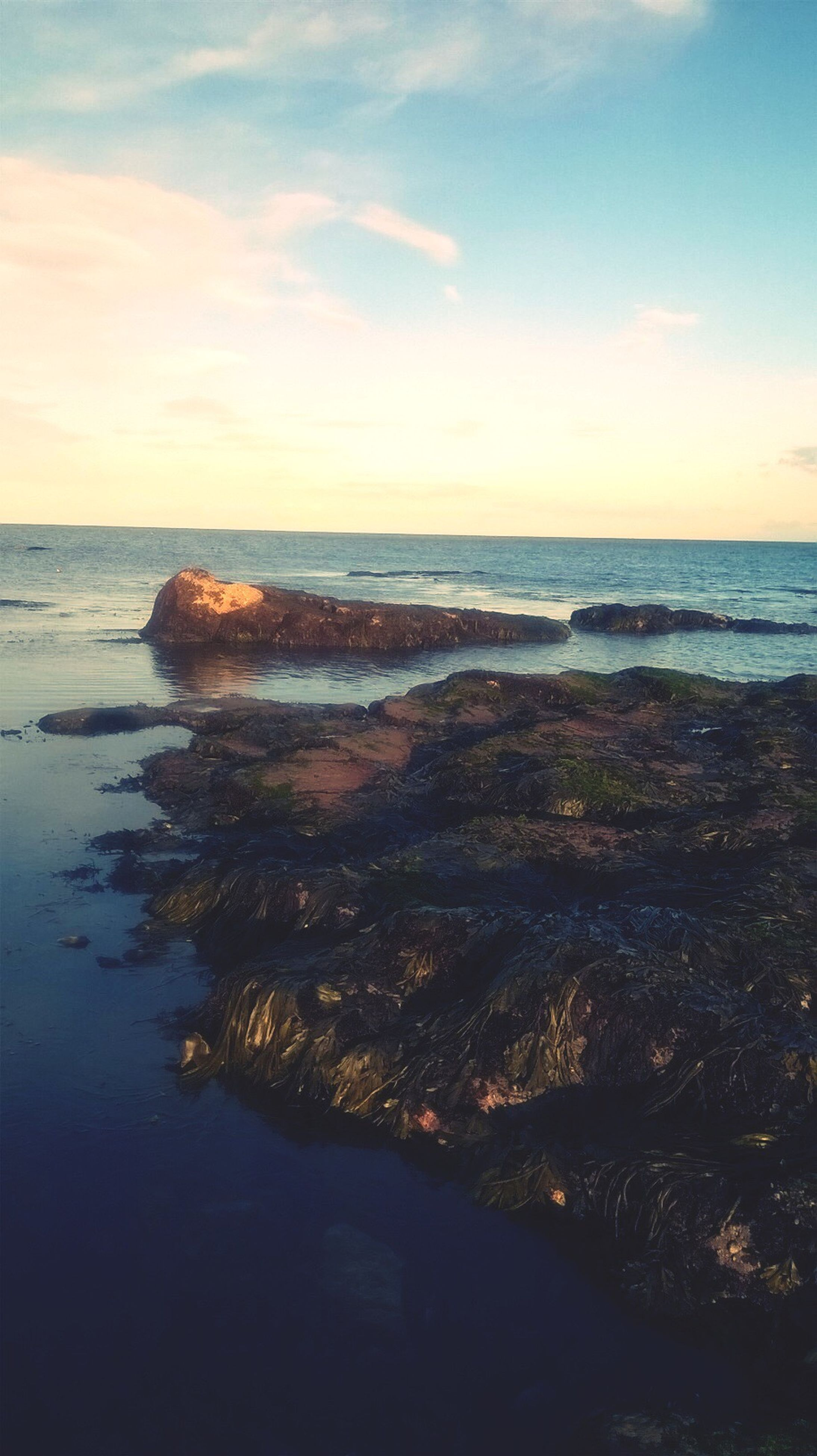 sea, horizon over water, sky, nature, beauty in nature, scenics, water, no people, sunset, beach, outdoors, cloud - sky, tree, day